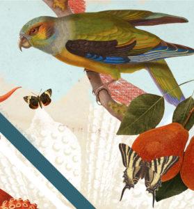 détail collage bird